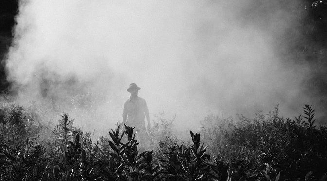 Pestizide: Der Bürger wird befragt